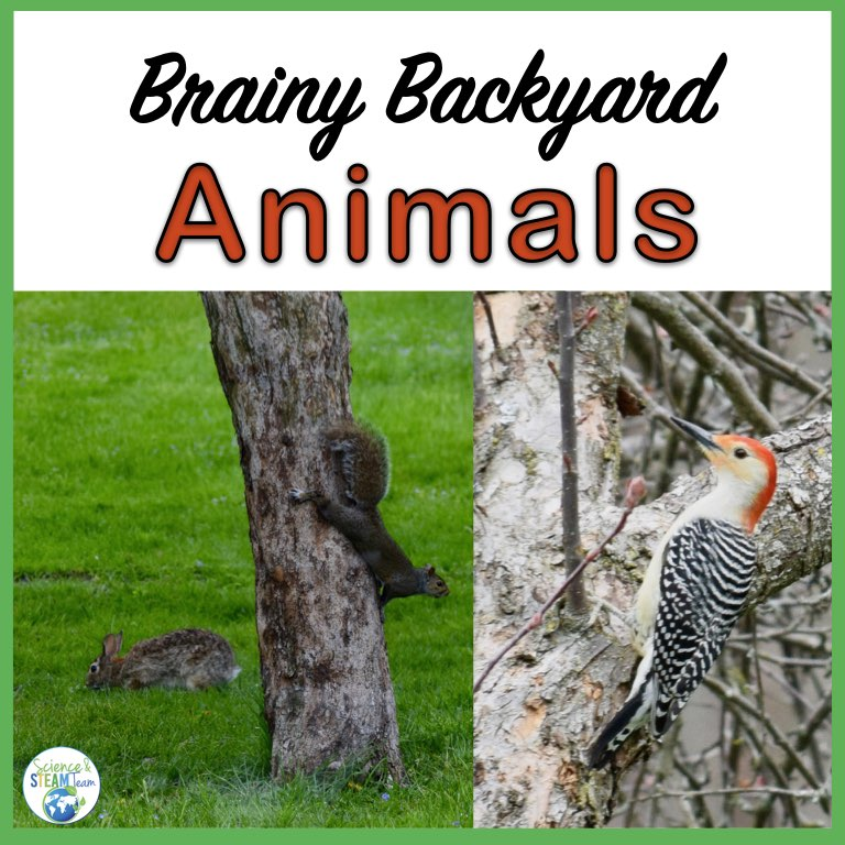 Brainy Backyard Animals