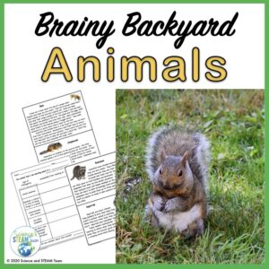 tpt resource about backyard animals