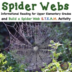 cover for TpT spider web challenge