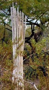 cactus skeleton in the desert botanical garden
