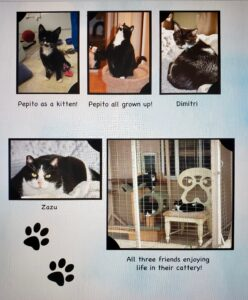 Pepito, the blind cat, and his friends