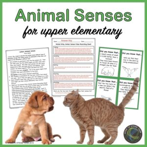 link to an animal senses resource in our TpT shop