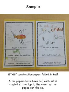 insect-flipbook
