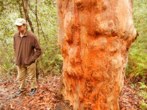 aboriginal walkabout guide