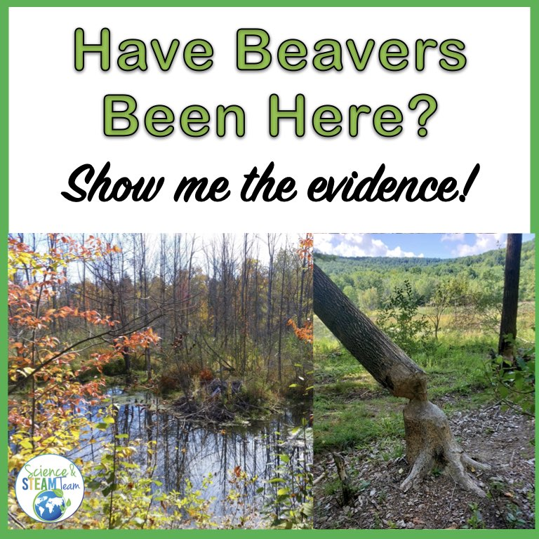 beavers blog header