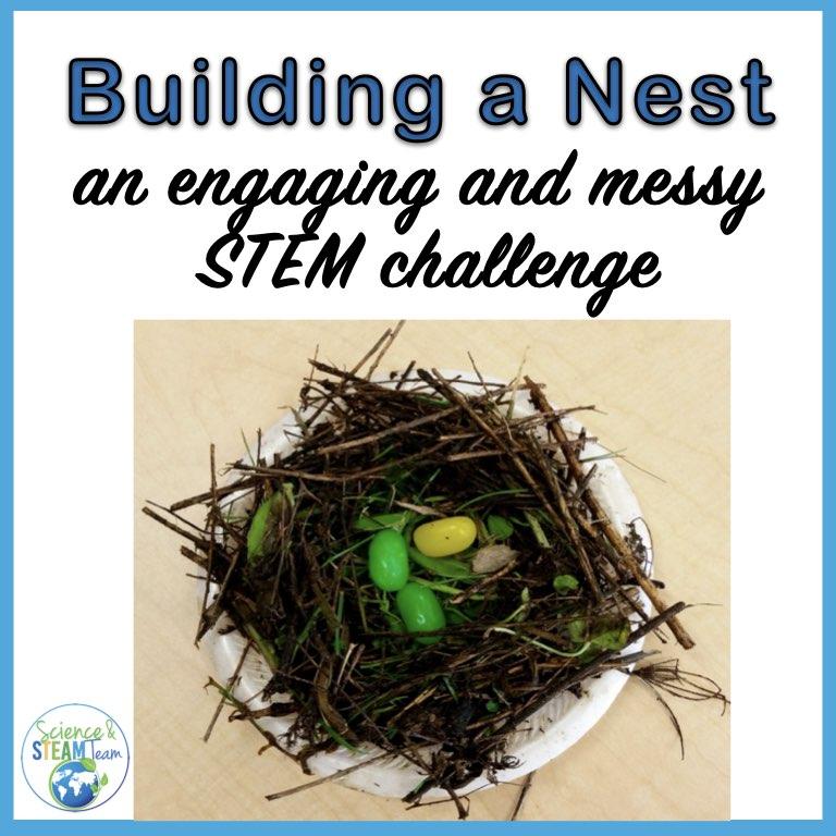 bird nest header
