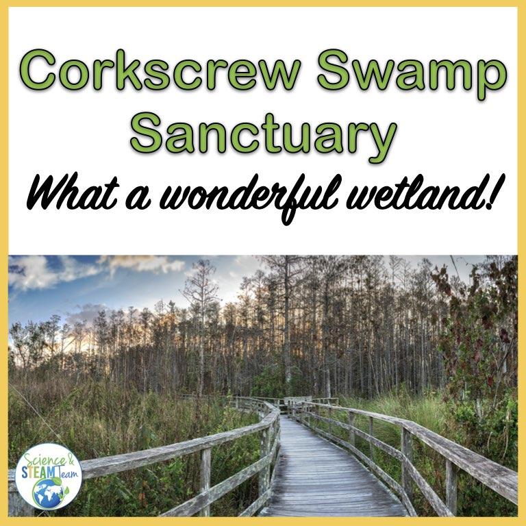 corkscrew swamp sanctuary header