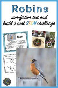 building a nest activities in TpT shop