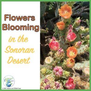 flowers blooming in the desert blog header