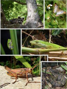 animals-of-corkscrew-swamp-sanctuary