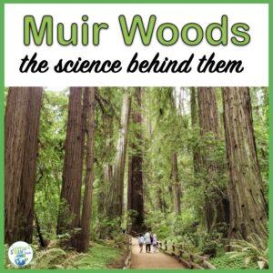 Muir-Woods-the-science-behind-them