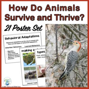 how do animals adapt to their environment poster set