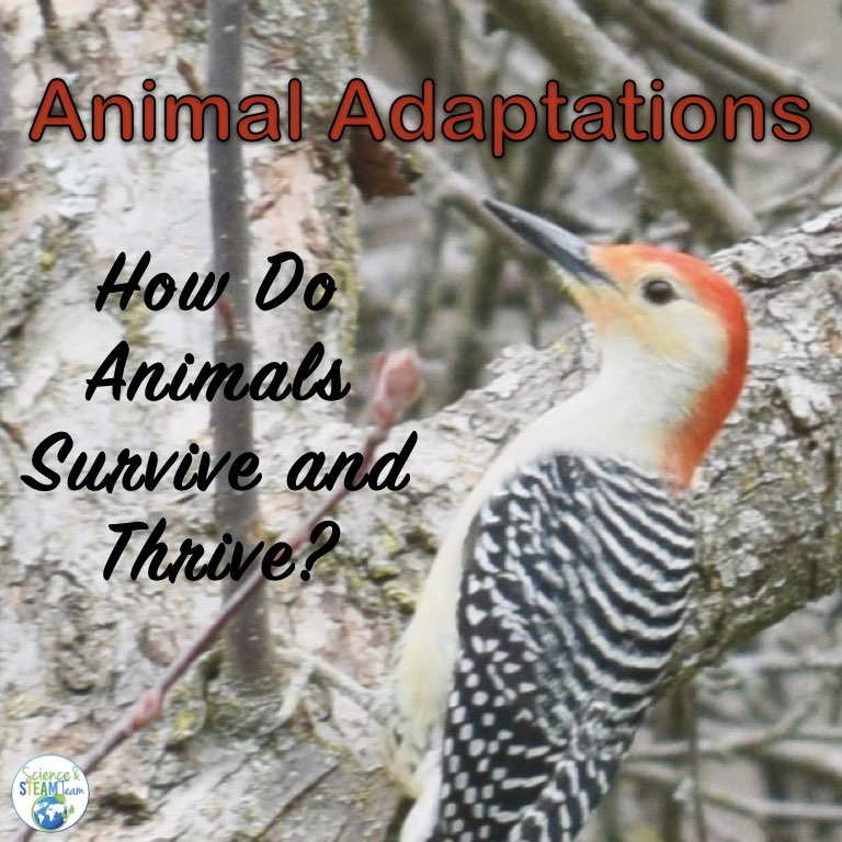 How do animals adapt to their environment cover shoving a woodpecker