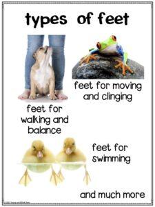 Types of animals feet